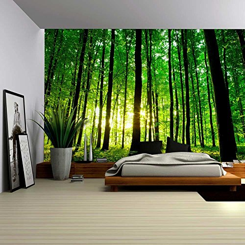 Sun Shining Through a Tall Tree Forest Wall Mural