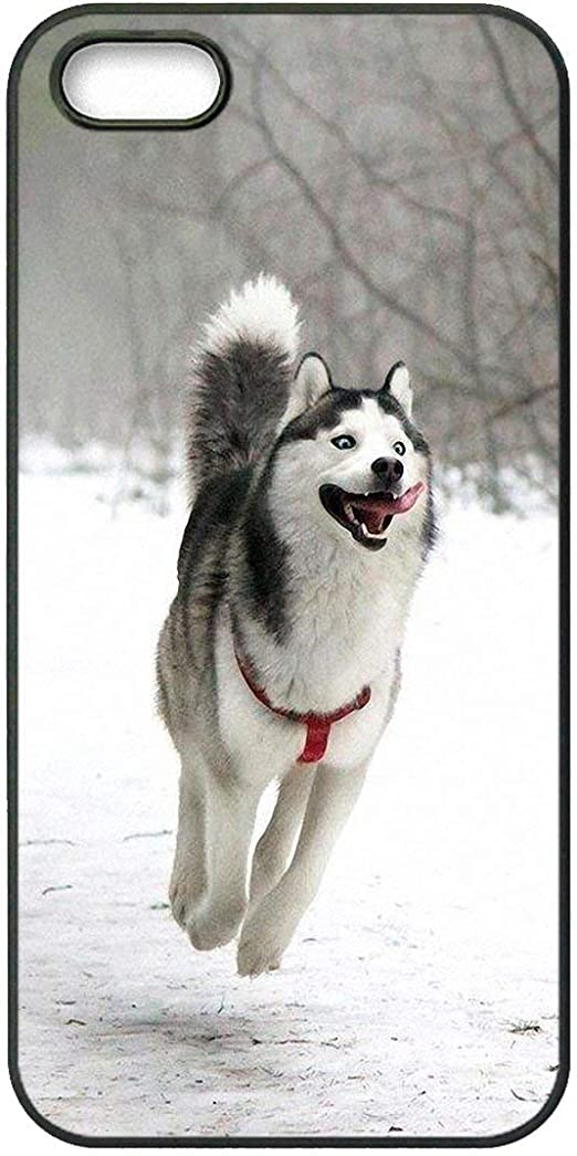 シベリアン ハスキー 子犬