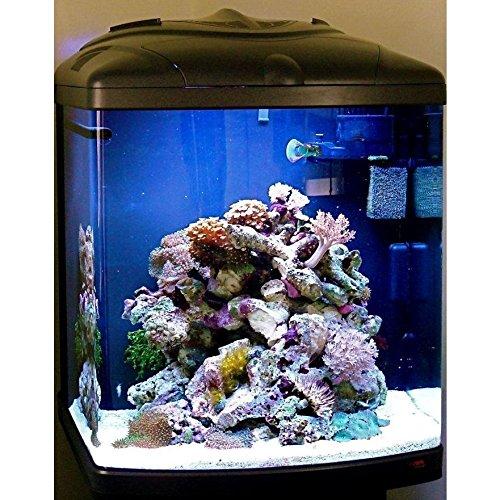 Sera 31100 Marin Mondi Biotop Cube 130 un 130 L de agua del mar acuario Completo con pl T5 iluminación y Filtración.: Amazon.es: Productos para mascotas