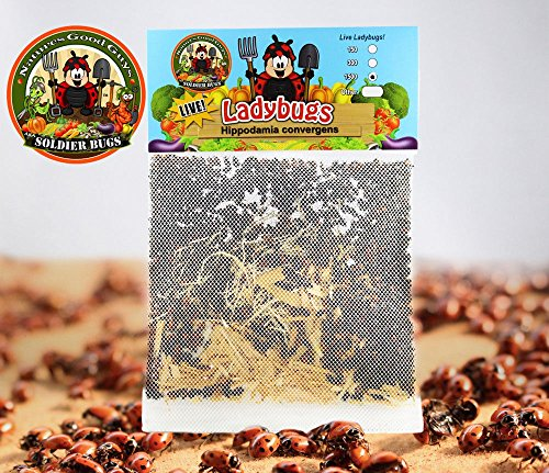 1500-live-ladybugs-good-bugs-ladybugs-guaranteed-live-delivery