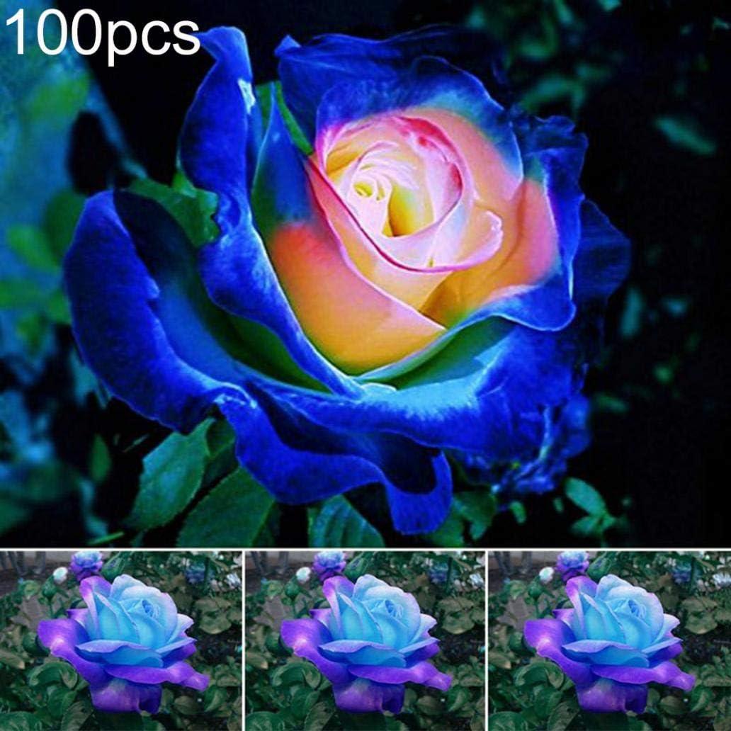Uticon 100pcs Azul-Rosa Rose Semillas De Flor Se Dirigen Jard¨ªN Perenne Bonsai Decoraci¨®N Vegetal - Las Semillas De Rose