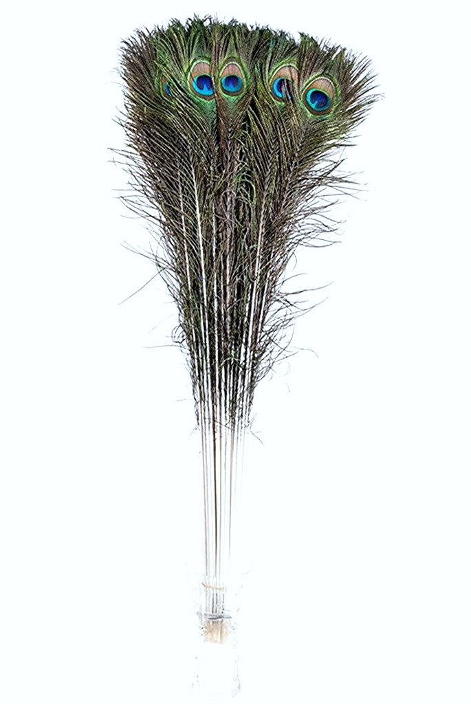 50 Pcs Peacock Feathers 35''-40''