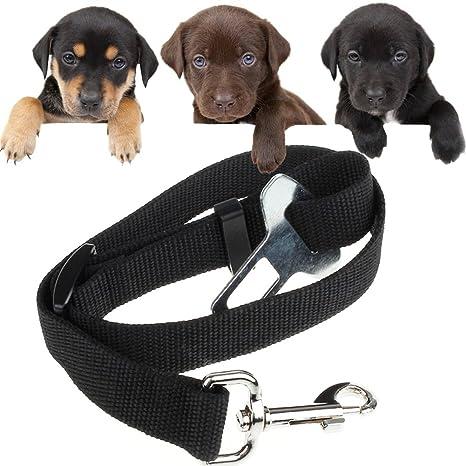 Cinturón de Seguridad para Perros para Auto, de gran calidad perro ...