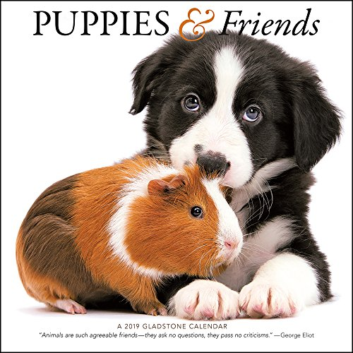 2019 Puppies & Friends Wall Calendar