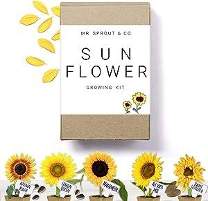 Sunflower Seed Starter Kit - Flower Seeds for Planting an Indoor Garden Kit | Starting Indoor Gardening Grow Kit with Plant Soil Mix | Growing Jumbo Sunflower Seeds To Plants Indoors - By Mr Sprout