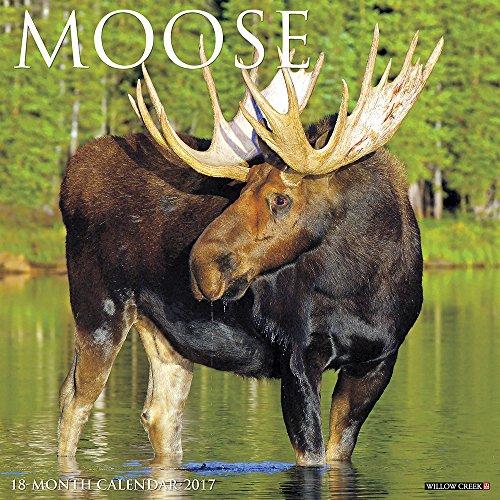 Moose Calendar - 4