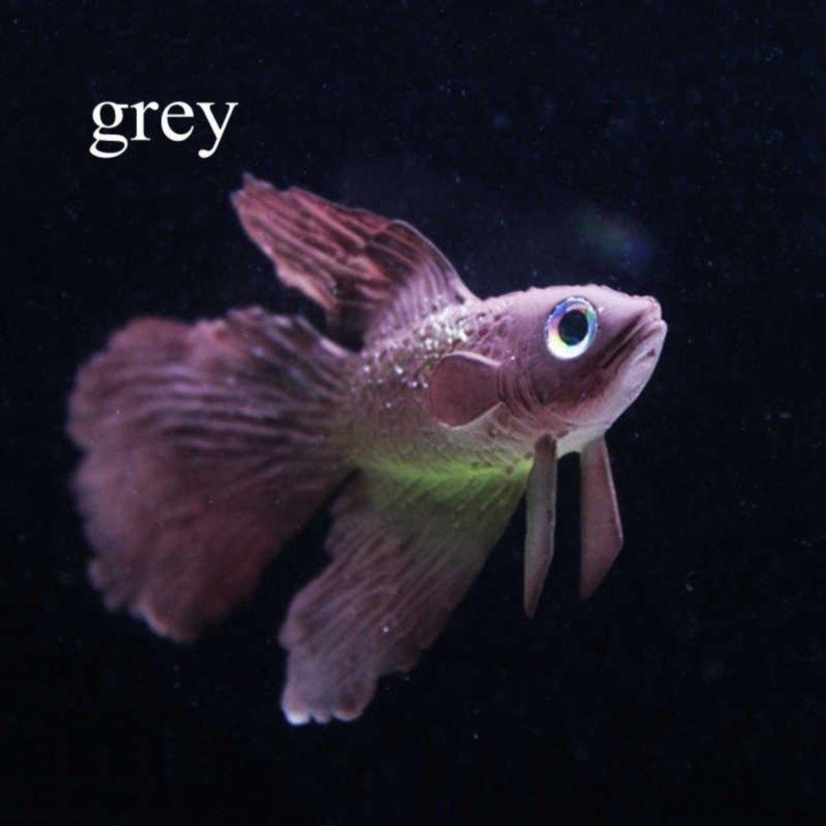 Jellbaby Acuario decorativo, diseño de peces, granada, pecera y pecera: Amazon.es: Hogar