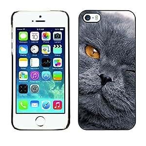 KOKO CASE / Apple Iphone 5 / 5S / grey shorthair cat scottish fold yellow eye / Slim Black Plastic Case Cover Shell Armor