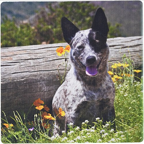 3dRose USA California Queensland Healer Sitting Among Flowers Mouse Pad (mp_192356_1)