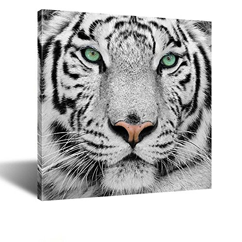 Kreative Arts - White Tiger Canvas Art Print Large Animal Wall Art Deco Canvas Picture Stretched on Wooden Frame as Modern Gallery Artwork Ready to Hang 24''x24'' (Canvas Print Art Deco)
