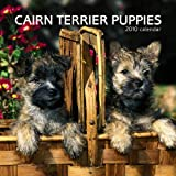 Cairn Terrier Puppies 2010 Mini Wall