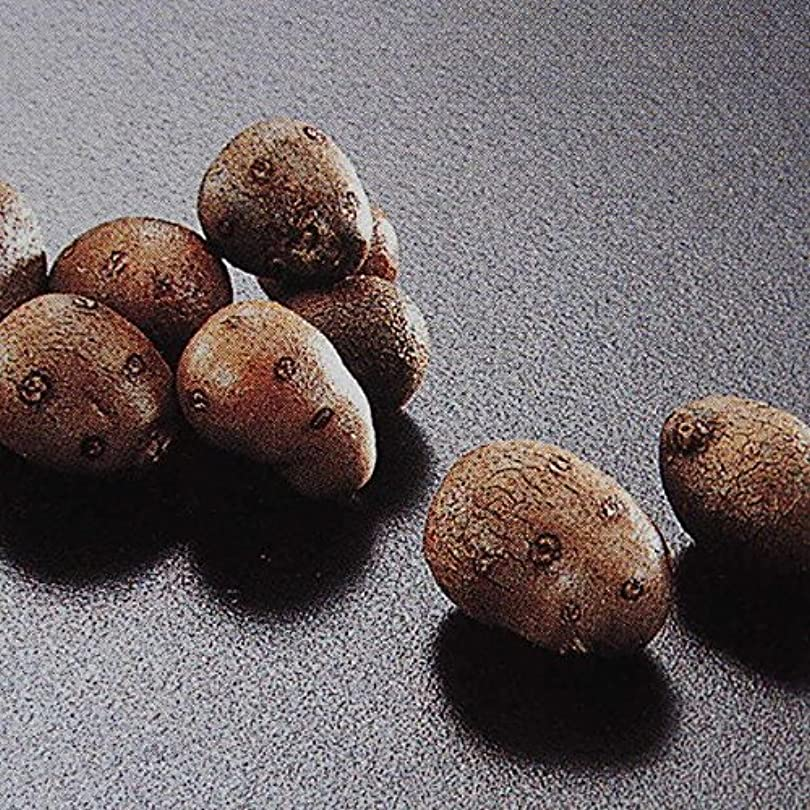 ファブリックワット喪長芋(長いも)【産地直送】ねばりっこ鳥取県産【砂丘(長芋)の交配種】3kg【3L×2本入り】 料理レシピ付
