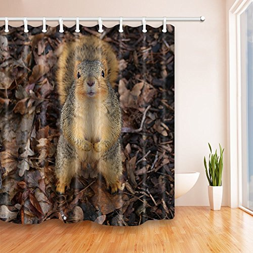 Rrfwq Grey Squirrels in The Leaves 70.8 X 70.8 inches Polyester Fabric Shower Curtain Set Fantastic Decorations Bath Curtain