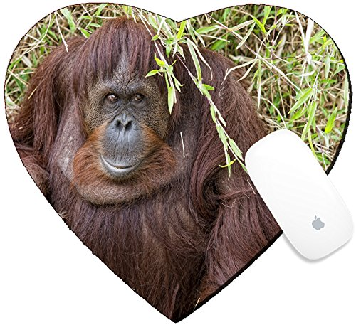 Luxlady Mousepad Heart Shaped Mouse Pads Mat Design Image Id  32011941 Orangutan Portrait While Looking At Yuo