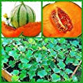 "10+ Charentais,""Non~GMO"" French Heirloom Cantaloupe~Melon Seeds, Juicy & Sweet."