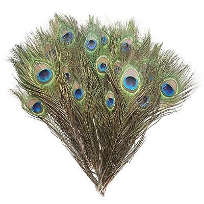 Piokio Peacock Feathers