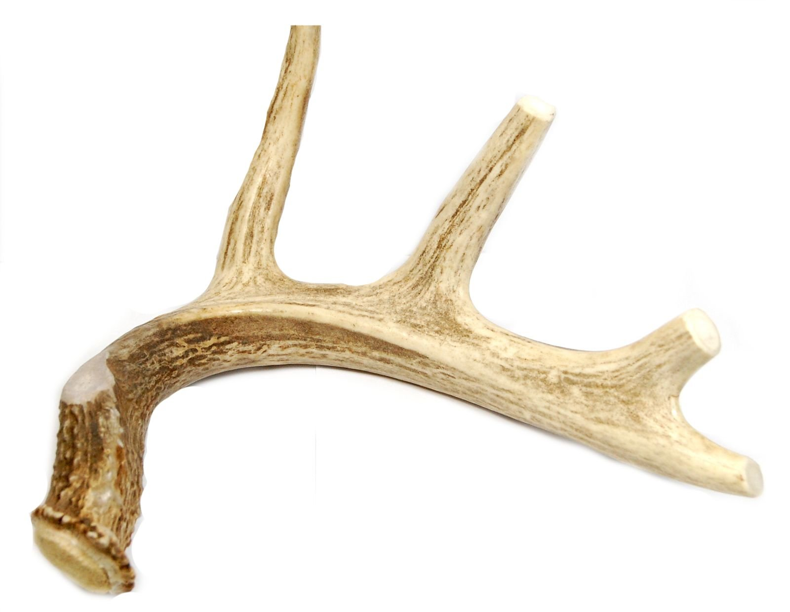 Big Dog Antler Chews Brand - Extra Large Whole Deer Antler Dog Chew - for Large Dogs and Puppies