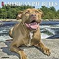 Just American Pit Bull Terriers 2018 Wall Calendar (Dog Breed Calendar)
