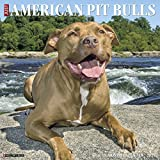Just American Pit Bull Terriers 2018 Wall Calendar (Dog Breed Calendar)