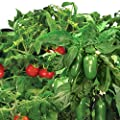 Miracle-Gro AeroGarden Salsa Garden Seed Pod Kit (7-Pod) includes: 2 pre-seeded Red Heirloom Cherry Tomato pods, 1 pre-seeded Jalapeno Pepper Grow Pod and 4 Plant Spacers