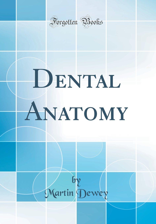 Dental Anatomy Classic Reprint Martin Dewey 9780656116232 Books