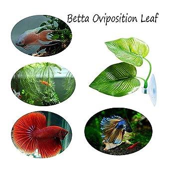 tianranrt nuevo Planta Artificial Hojas Betta Hamaca pescado Rest cama tropisch Acuario Decoración (verde), Verde: Amazon.es: Bricolaje y herramientas