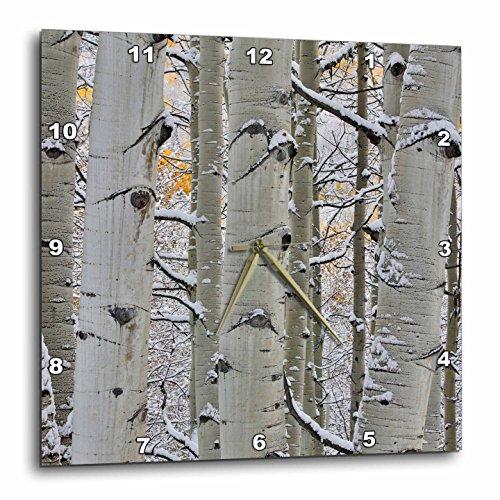 Colorado Rockies Clock - 3dRose Danita Delimont - Forests - Close up of aspen tree, Keebler Pass, Rocky Mountains, Colorado - 10x10 Wall Clock (dpp_278823_1)