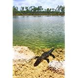 Wallmonkeys Florida Everglades American Alligator Wall Mural Peel and Stick Graphic (30 in H x 20 in W) WM360627