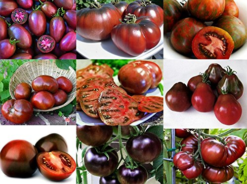 Please Read! This is A Mix!!! 30+ Organically Grown Black Tomato Seeds, Mix of 9 Varieties, Heirloom Non-GMO, Black Prince, Cherokee Purple, Black Cherry, from USA (Heirloom Tomato Seed Mix)