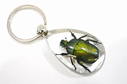 Real Insect Bug Key Chain(June Bug Key Chain)