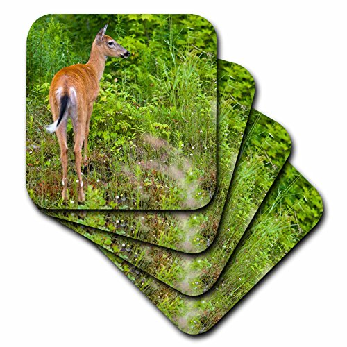(3dRose cst_92430_3 Whitetail Deer, Pittsburg, New Hampshire - US30 JMO1602 - Jerry and Marcy Monkman - Ceramic Tile Coasters, Set of 4)