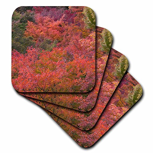 Danita Delimont - Forests - Autumn colors and