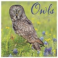 Owls 2019 Wall Calendar