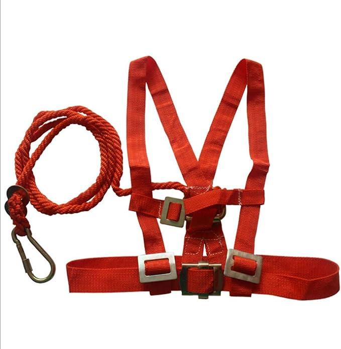 Cinturón De Seguridad En La Parte Posterior Doble Cinturón De ...