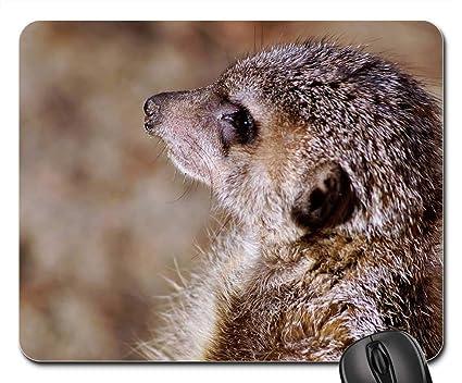 f01427476ac47 Amazon.com : Mouse Pad - Meerkat Timon Nature Zoo Animal Animals ...