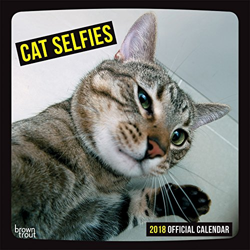 Cat Selfies 2018 12 x 12 Inch Monthly Square Wall Calendar, Pet Humor Kitten