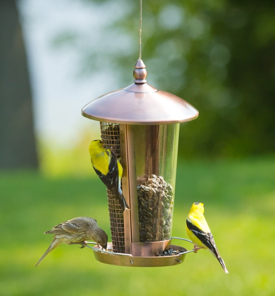 Wild Bird Feeder Attract More Birds Perfect For Garden Decoration Great Feeders Small Medium Easy To Clean And Fill Hanger