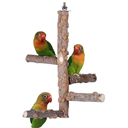 Kintor Bird Perch Nature Wood Stand For Small Medium Parrots