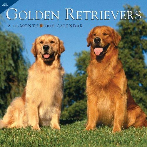 Golden Retrievers 2010 Wall Calendar