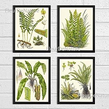Botanical Set of 4 Prints Unframed Antique Beautiful Ferns Green Forest Nature Home Room Fern Decor Wall Art