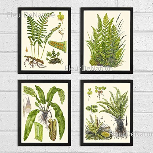 Botanical Set of 4 Prints Unframed Antique Beautiful Ferns Green Forest Nature Home Room Fern Decor Wall Art ()