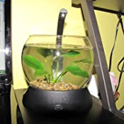 Amazon.com : Tetra Betta Bowl, Black : Fish Bowls : Pet Supplies