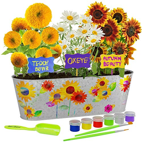 Dan&Darci Paint & Plant Sunflower Growing Kit - Grow Autumn Beauty, Teddy Bear, Oxeye Sun Flowers : Includes Everything Needed to Paint and Grow - Great STEM Gift for Children (Childrens Seed Kit)