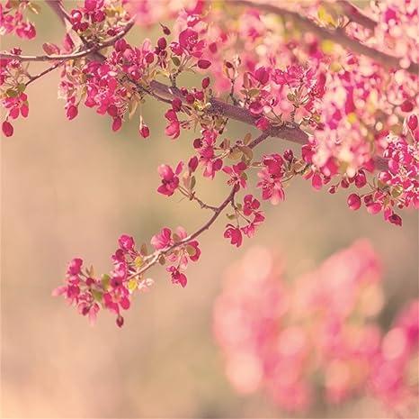 866c9d7c4fe8 Amazon.com : LFEEY 8x8ft Tree Flowers Photo Backdrop Natural Spring ...