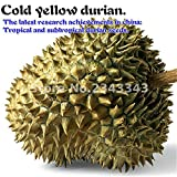 NEW Sale 20pcs A Lot Delicious Durian Seeds King Of Tropical Fruit Trees Seed Giant GARDEN Plants Bonsai Tree Sementes . Light Grey