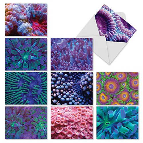 M3103 Under The Sea: 10 Assorted Blank All-Occasion Note Cards Featuring Colorful Close-Ups of Sea Anemones, w/White Envelopes.