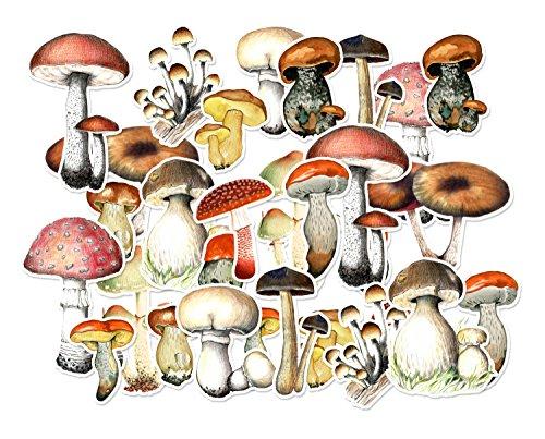 Matte Mushroom - 3