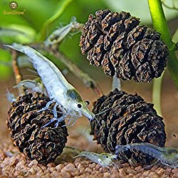 Naturally Grown, Pesticide Free SunGrow Alder Cones (50 pcs) for Shrimps - Lowers pH level, Fight Bacteria and Prevent Fungal Infections in Aquatic Environment : Perfect for both big & small Aquariums