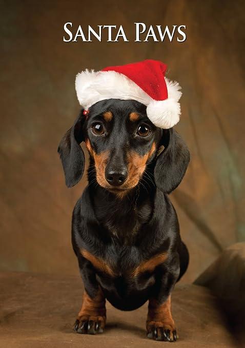Biglietto Di Natale In Miniatura Cane Bassotto Di Charles Sainsbury