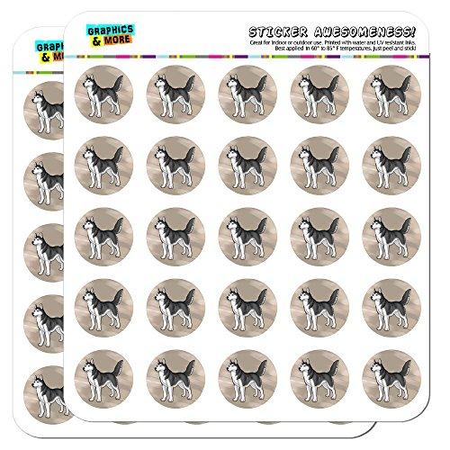 Siberian Husky Pet Dog 1